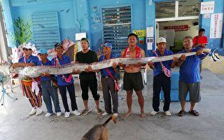 撿到5公尺長地震魚 台族人:祖靈賜予的禮物