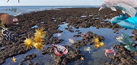 桃園在地聯盟呼籲挽救全球僅存大潭藻礁。