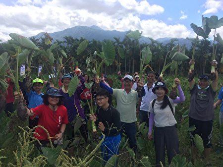 """屏东第一位种植产销履历芋头农友简玮良,与文藻外语大学合作,推出""""紫斑香芋轻旅行"""",从去年10月至今已有500多位游客,体验深度农村生态之旅。"""