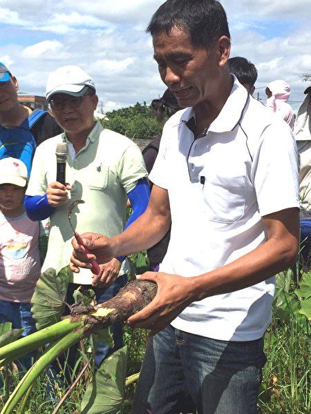 屏东第一位种植产销履历芋头农友简玮良,带领游客体验芋头种植、采收等过程。