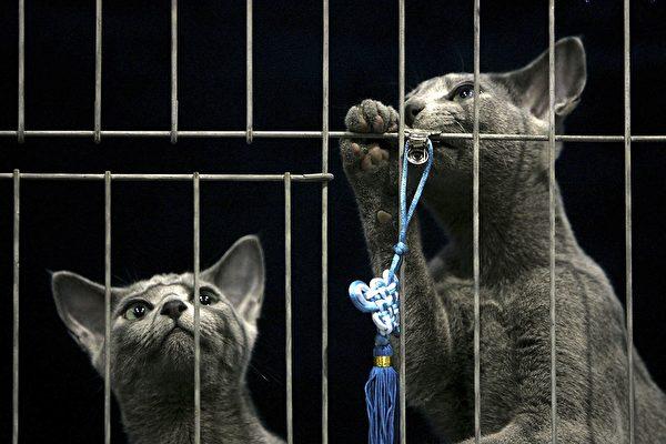 组图:这对猫咪姊妹有迷人的蓝绿色眼睛