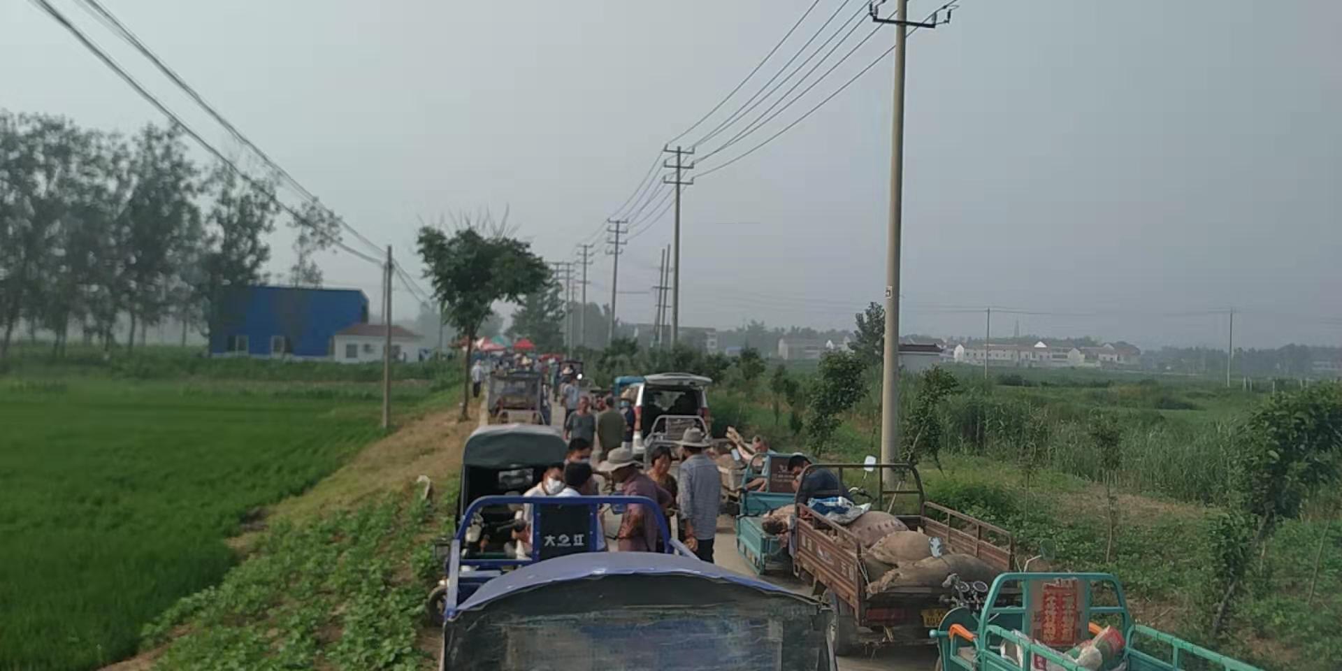江蘇灌南爆豬瘟 上萬死豬埋村中 民眾抗議