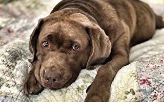 牠守著主人丟的床墊苦等 照片上網翻轉犬生