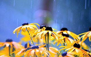 用什麼水澆灌植物最佳