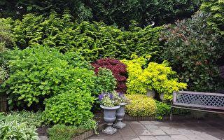 冬季如何打理庭院