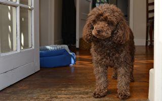 寶寶半夜哭鬧,看看狗狗進她房間做了什麼!