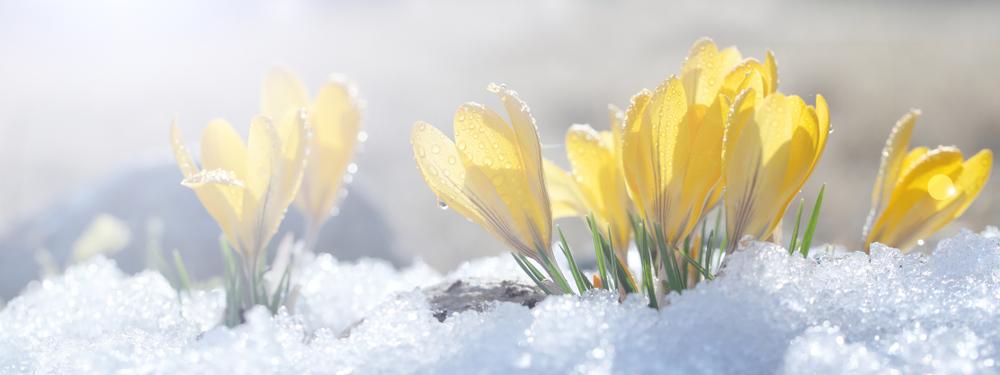 冰雪漸融,春天臨近。(shutterstock)