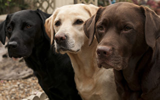 警犬是怎么找到阿冈昆露营失踪少女的?