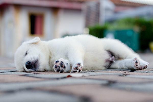 希腊忠狗在主人车祸丧命处守候一年半