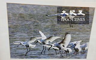 王耀民攝影展 走訪布袋回味543