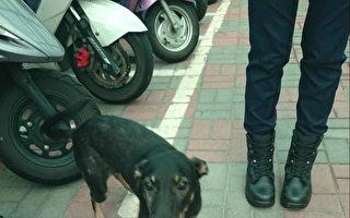 小狗流浪到派出所 差点变身成警犬