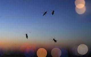 加拿大蚊子增多 恐携带登革热、塞卡病毒