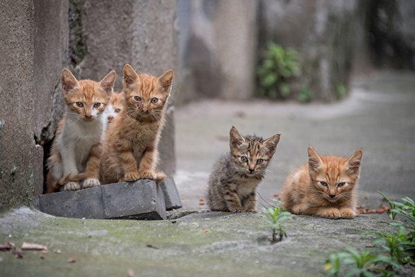 为什么小猫会吃草?