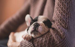 猫狗收养注册费过高 维州部分市府引不满