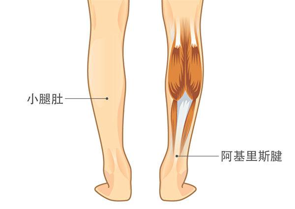 揉压整个小腿肚与阿基里斯腱后,脚踝会变得非常柔韧,稍微绊到也不会跌倒。(Shutterstock)
