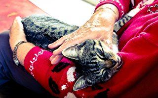 维州老妇昏倒险丧命 猫咪奋力救主惹人爱
