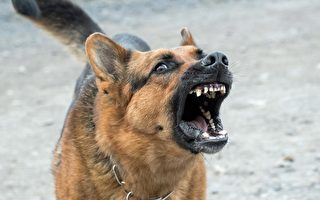 犬吠遭投訴 維州母親拒付罰款