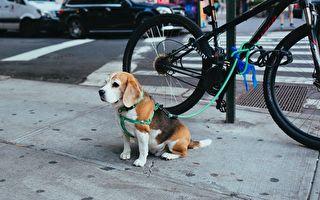 帶著寵物逛街時,你是否也會隨意將愛犬拴在街頭,暫時安置呢?看完這個流浪狗行俠仗義的故事,就知道這不是明智之舉!示意圖。(Pixabay)