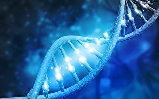 微觀蛋白如直升機 鑑定監察DNA的修復
