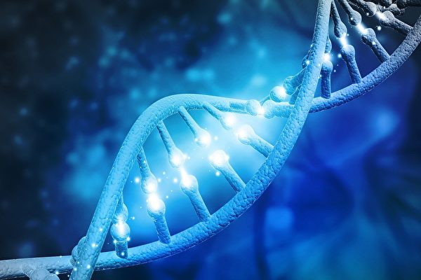 微观蛋白如直升机 鉴定监察DNA的修复
