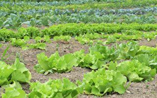 蔬菜轮作有益土壤健康 在家中也可尝试