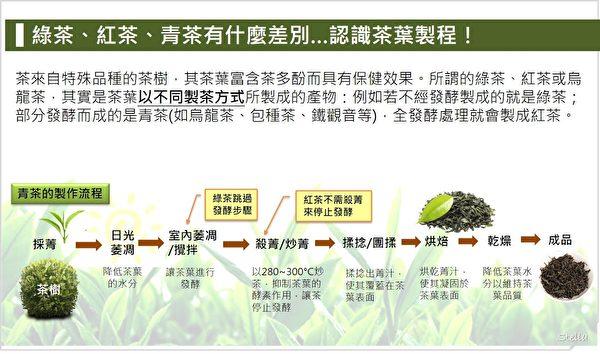 綠茶、紅茶、青茶有什麼差別?認識茶葉製程。(Stella營養師提供)