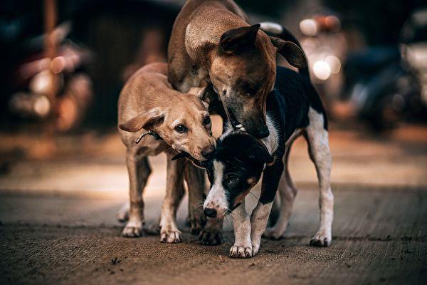 流浪狗虽然在荒郊野外餐风露宿,但它们看到同病相怜的狗狗,也会伸出援手彼此帮助。示意图。(Pixabay)