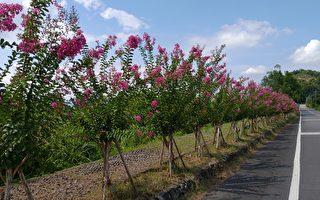 紫薇花开  畅游大进  淋漓绿竹