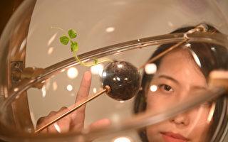 清華女生指揮植物長成藝術 登林茲電子藝術節