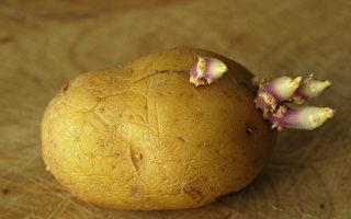 食物发芽能吃吗?有的有毒 有的更营养