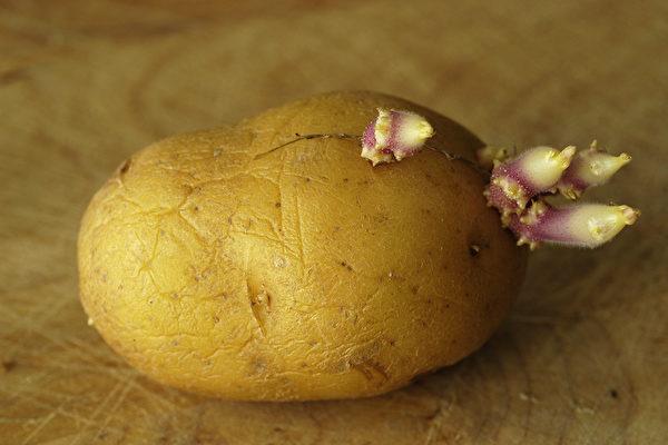 馬鈴薯發芽能吃嗎?哪些食物發芽後能吃、哪些更營養?(Shutterstock)