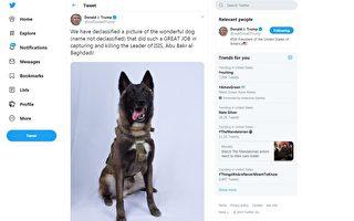 歼灭ISIS首脑有功 美军犬将受邀做客白宫