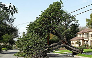 预防性断电引加州供电网讨论