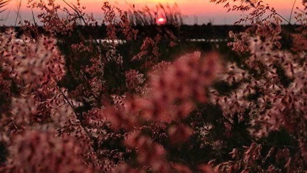 組圖:高雄芒花祕境 千百姿態芒花之美