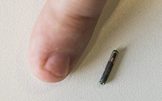 implant microchip