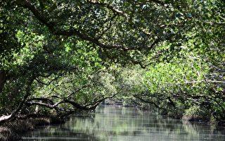 不只黑面琵鷺 台江也是海洋生物物種超級熱點