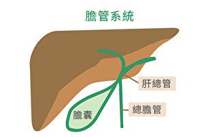 致命、少見的膽管癌在亞裔中更常見。(Wikimedia Commons/大紀元製圖)