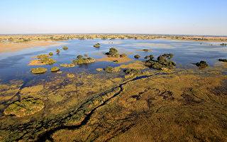 非洲大象當建築師 在三角洲設計與開鑿河道