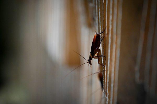 為了撲殺蟑螂 巴西男子炸翻整個後院