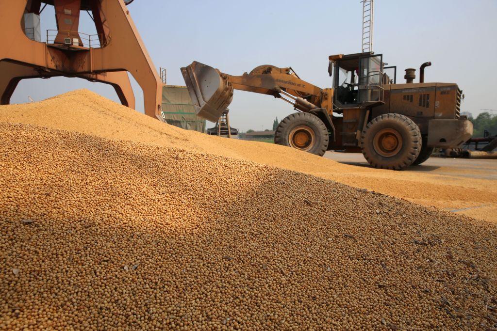 北京再次豁免關稅 中國買家重返美大豆市場