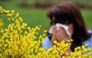 维州花粉季开始 哮喘及花粉症患者需注意
