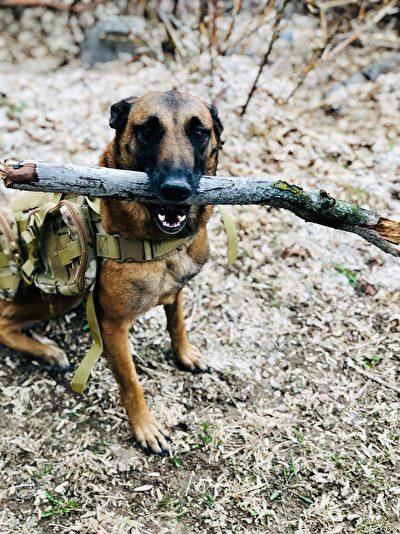 跟主人上學的助行服務犬薩莎
