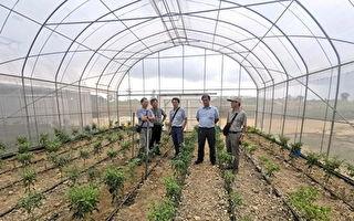 嘉大新南向政策  赴马国助农民解决蔬菜生产