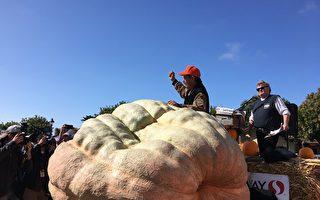 南瓜重2,175磅 破半月灣歷屆加州參展紀錄