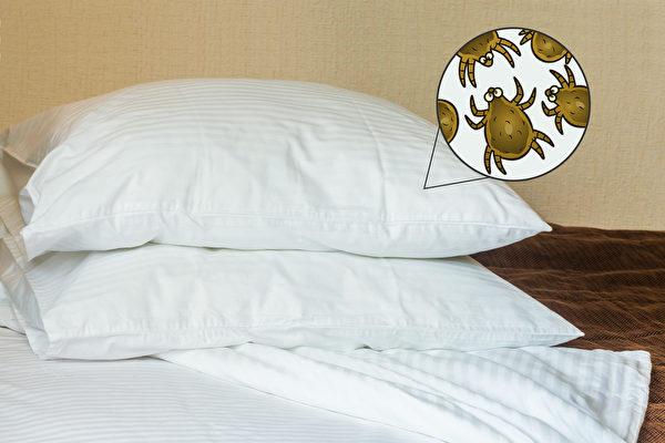 枕头、毛巾等居家用品容易积聚尘螨,如何防治家中尘螨、清除恼人的过敏原?(Shutterstock)