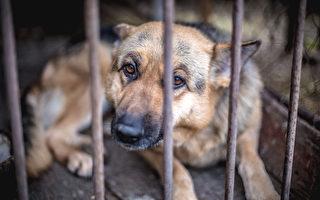 安省提議加大懲罰虐待動物者 加拿大最嚴厲