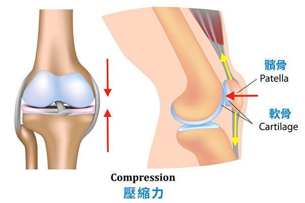 深蹲時膝蓋收到的壓縮力。(采實文化提供/大紀元譯製)