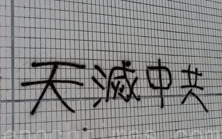諸葛高參:豬年豬瘟 鼠年鼠疫 天滅中共 誰擋誰亡