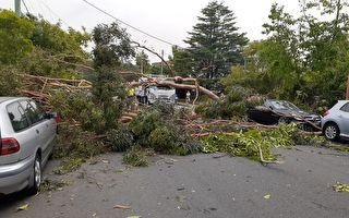 破坏性暴风雨袭击悉尼 近8万用户断电