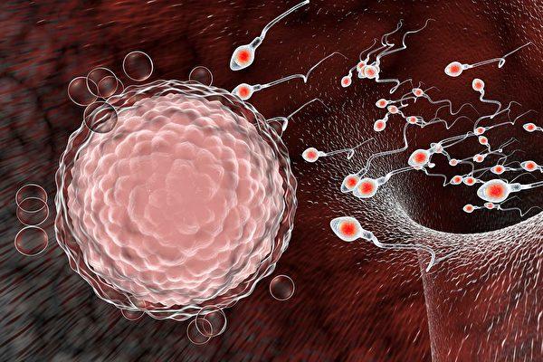 研究:卵子有意挑選「垂死」精子結合